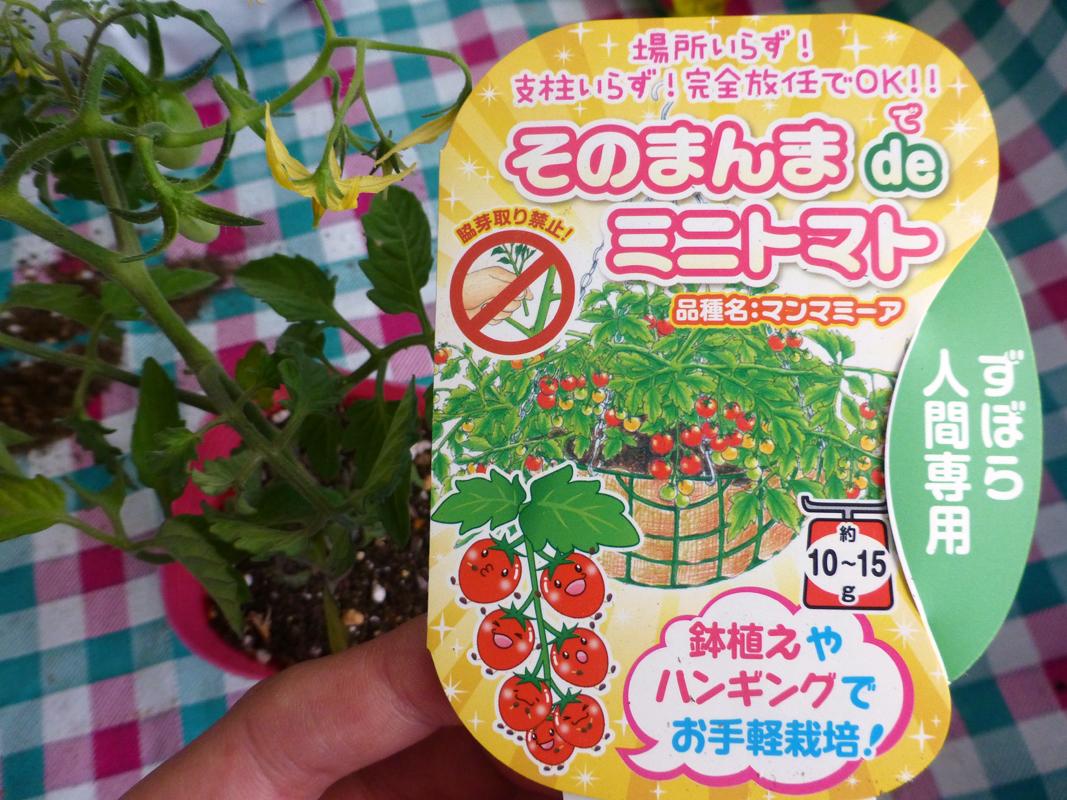 ハンキングでトマト栽培