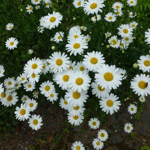咲き誇る花束