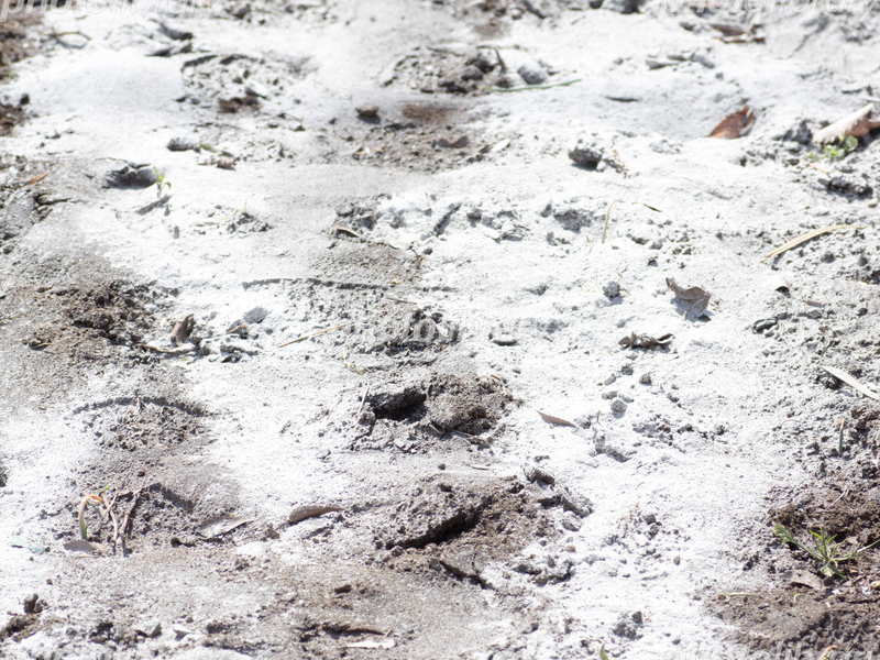 土の酸度調整する目的と改良資材