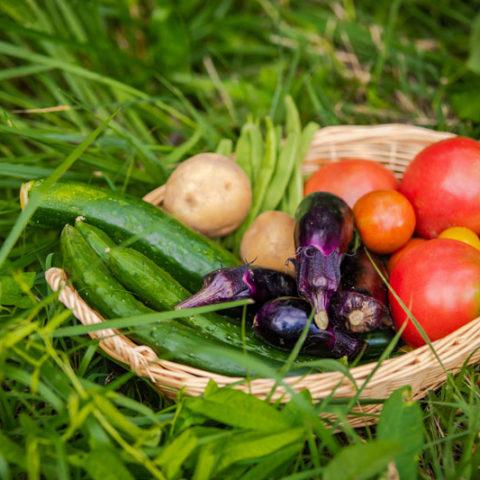 身体によい食べ物という幻。自分の身体を知っているのは自分だけということ。